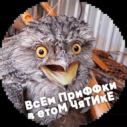 Птицы тупицы - Sticker 9