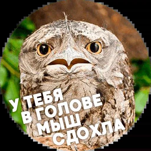 Птицы тупицы - Sticker 16