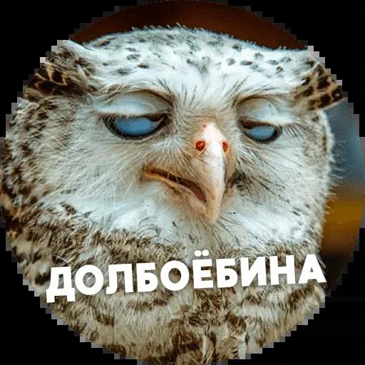 Птицы тупицы - Sticker 17