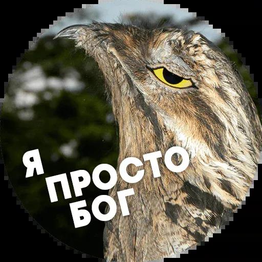 Птицы тупицы - Sticker 7