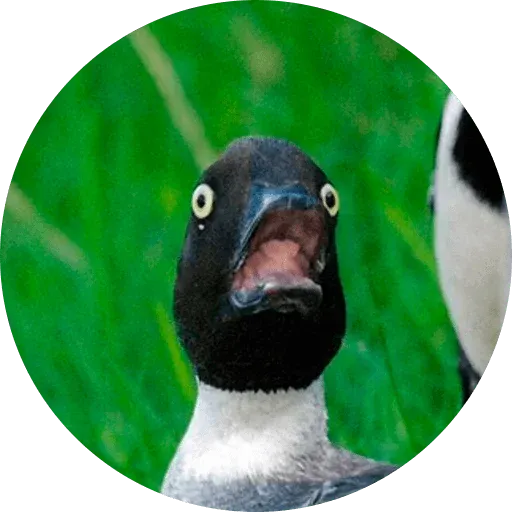 Птицы тупицы - Tray Sticker
