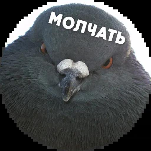 Птицы тупицы - Sticker 15