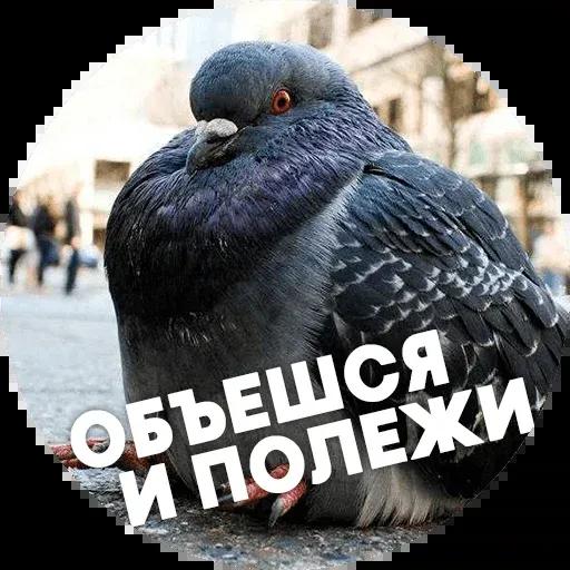 Птицы тупицы - Sticker 12