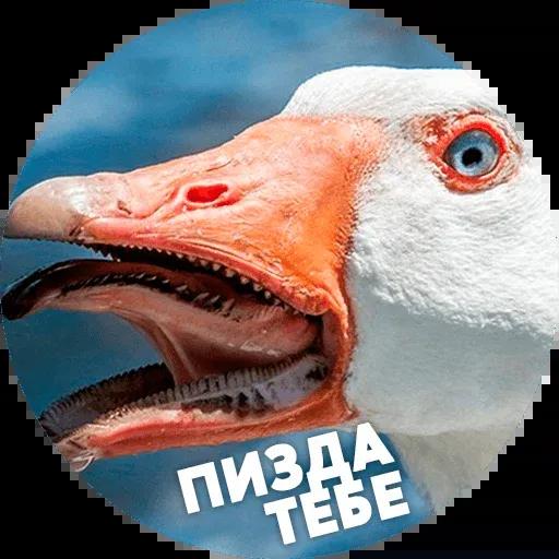 Птицы тупицы - Sticker 13