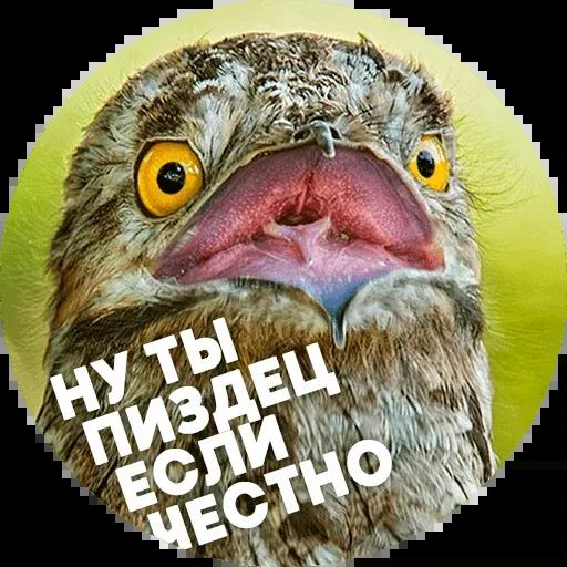 Птицы тупицы - Sticker 11