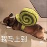 DOG - Tray Sticker