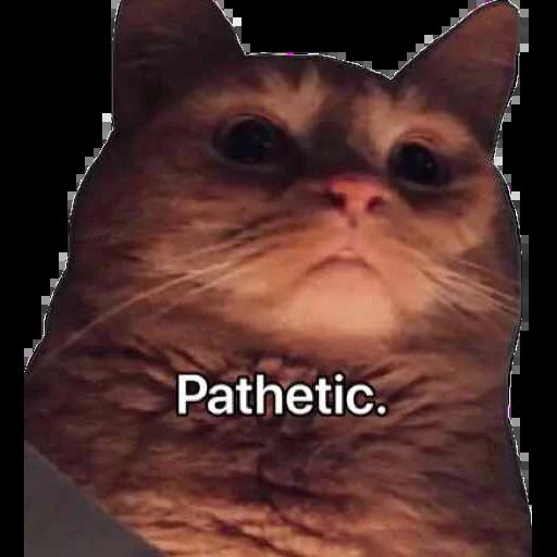 Memes - Sticker 19