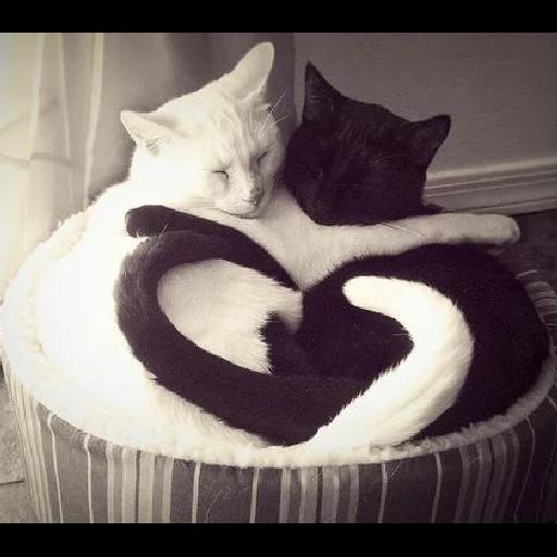 Cats 2 - Sticker 6
