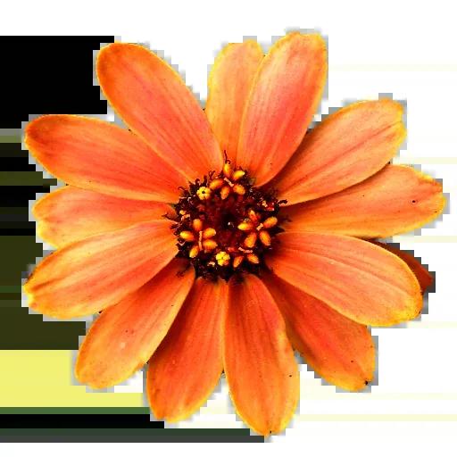 Flowerrr - Sticker 4