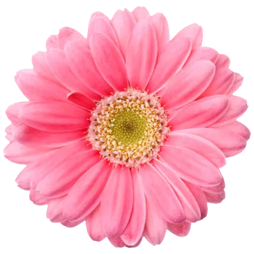 Flowerrr - Sticker 5