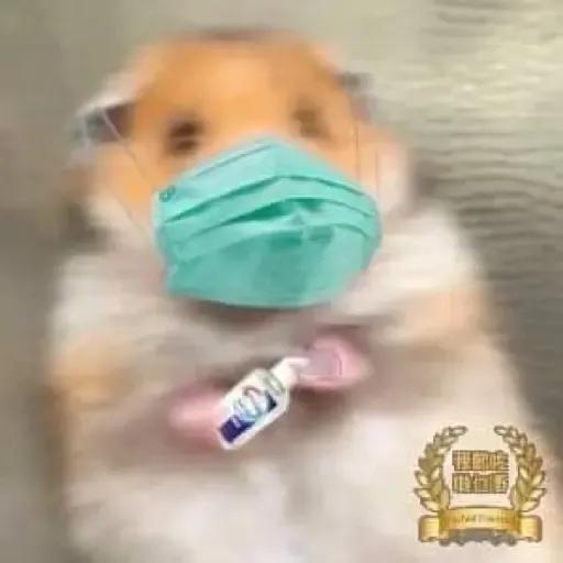 sbb HK Hamster - Sticker 7