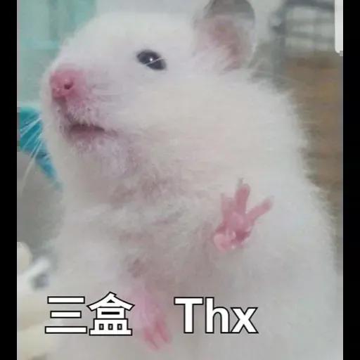sbb HK Hamster - Sticker 8