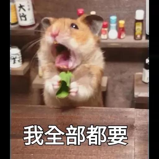 sbb HK Hamster - Sticker 5