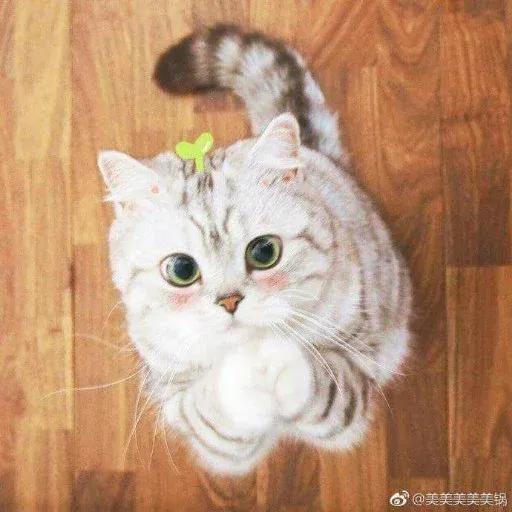 Catcat1 - Sticker 4