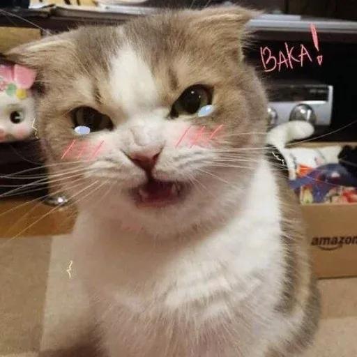 Catcat1 - Sticker 7