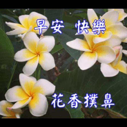 長輩圖 - Sticker 25