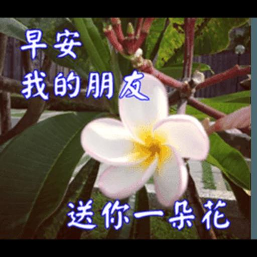 長輩圖 - Sticker 18