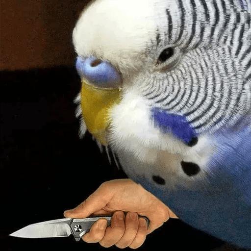 Bird 3 - Sticker 17