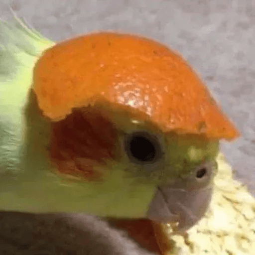 Bird 3 - Sticker 20