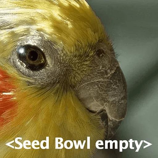 Bird 3 - Sticker 15