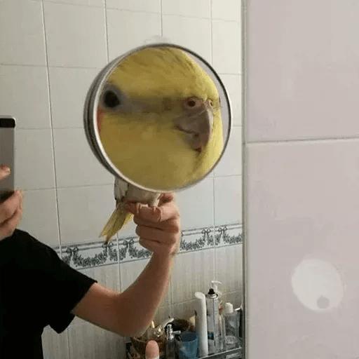Bird 3 - Sticker 25