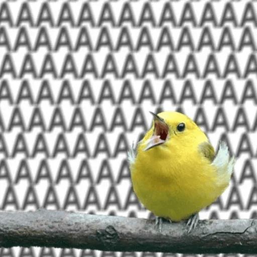 Bird 3 - Sticker 10