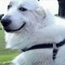 Dogs - Tray Sticker