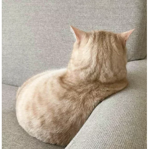 Meow - Sticker 26