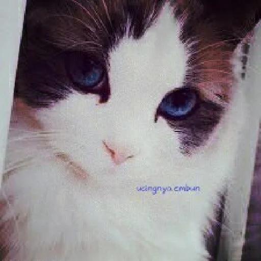 Meow - Sticker 8