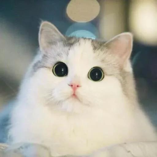 Meow - Sticker 1