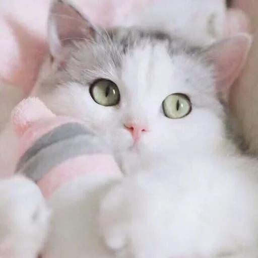 Meow - Sticker 10