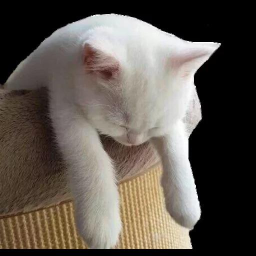 Meow - Sticker 27