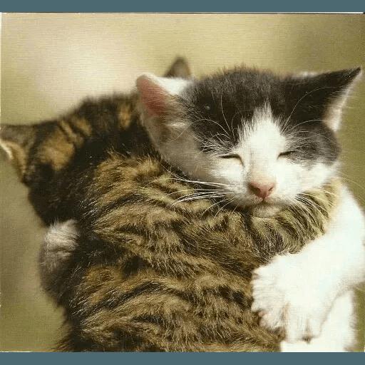 Animals - Sticker 5