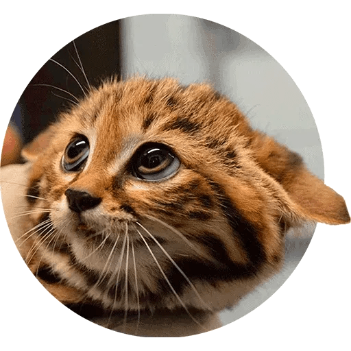 Animals - Sticker 3