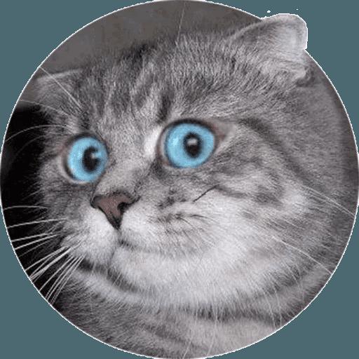 Animals - Sticker 2