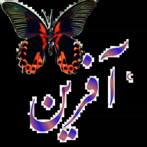 مراد اکبری ۲ - Sticker 29