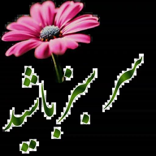 مراد اکبری ۲ - Sticker 8