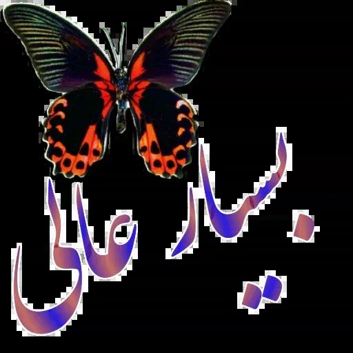 مراد اکبری ۲ - Sticker 13