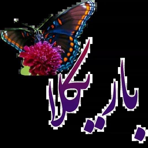 مراد اکبری ۲ - Sticker 9