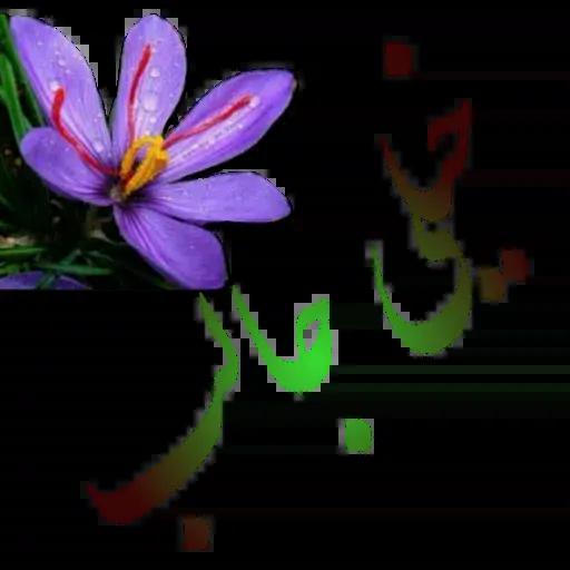 مراد اکبری ۲ - Sticker 24
