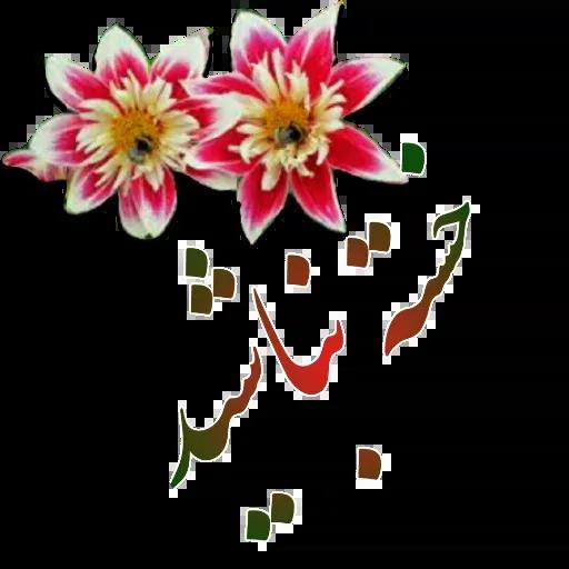 مراد اکبری ۲ - Sticker 5