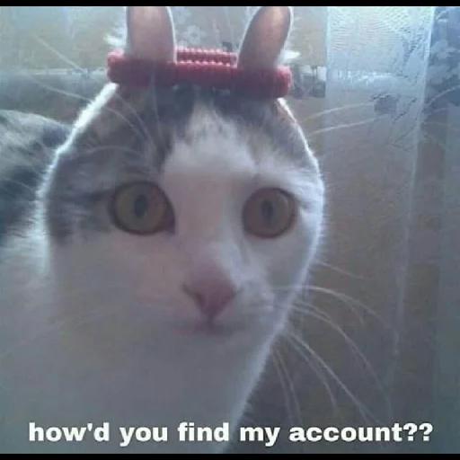 Cat 4 - Sticker 19