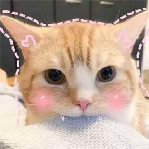 Cat 4 - Sticker 5