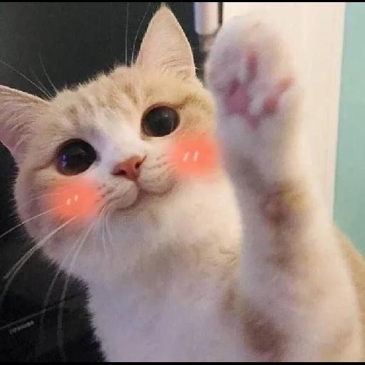 Cat 4 - Sticker 17