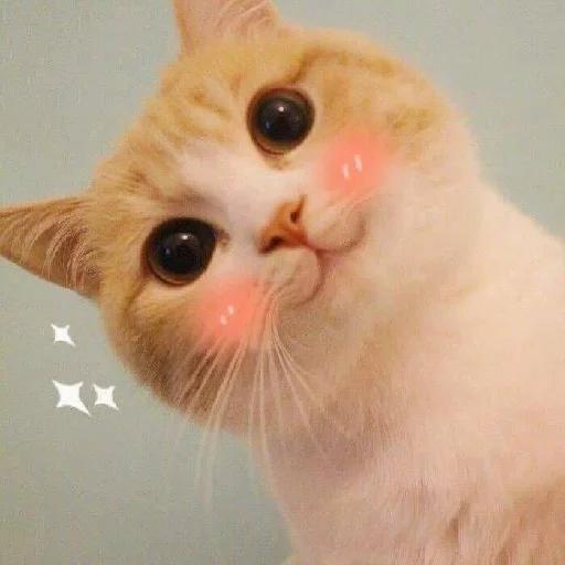 Cat 4 - Sticker 2