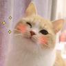Cat 4 - Tray Sticker