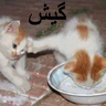 Amoo mahdi - Tray Sticker