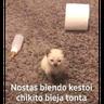 Meme1 - Tray Sticker