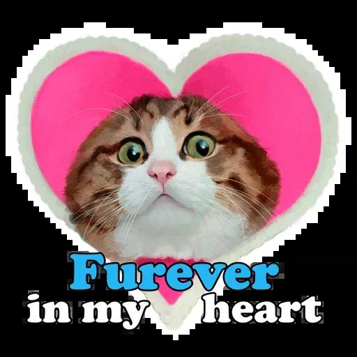 Rexie cat - Sticker 10