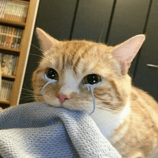 Meow:3 (2) - Sticker 8